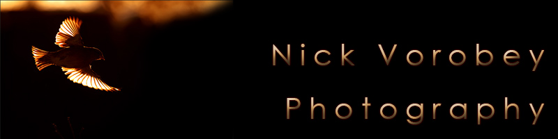 Nick Vorobey - Photography